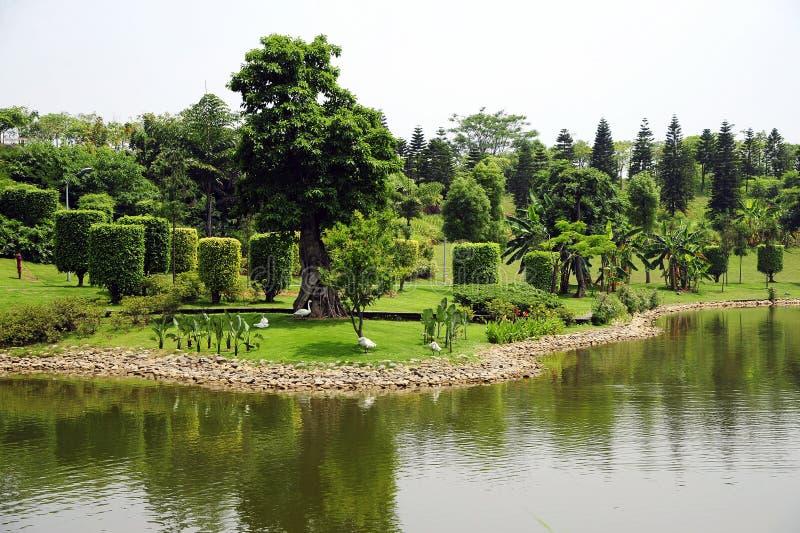 Download Park arkivfoto. Bild av miljö, härlig, växter, vatten - 19775590