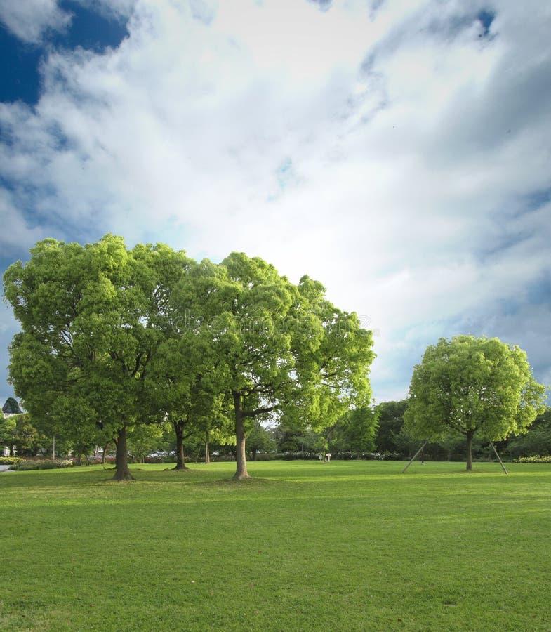 Download Park stock photo. Image of park, plant, bright, blue - 22820252