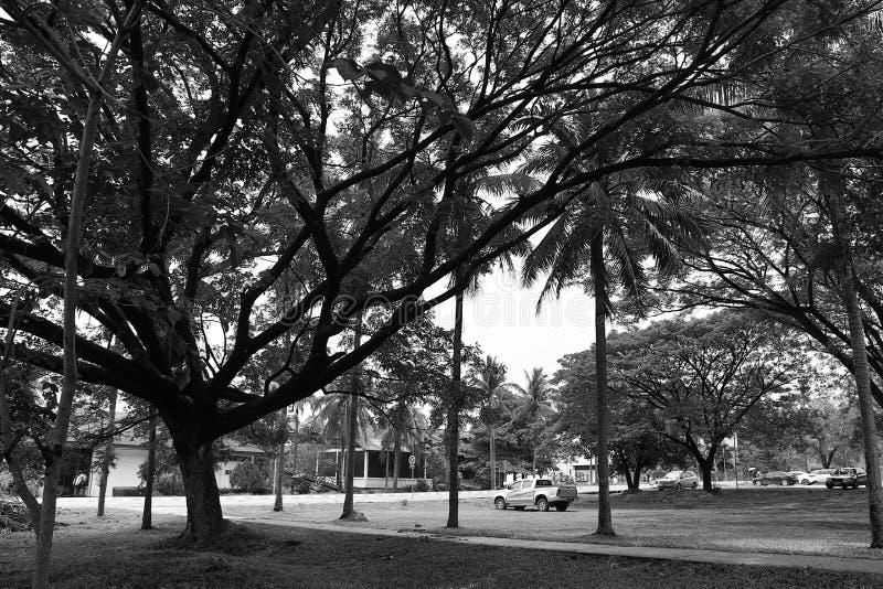Park stockfotos