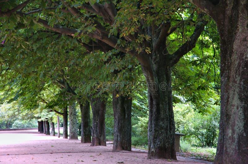 Download Park arkivfoto. Bild av natur, park, trädgård, bana, utomhus - 979752