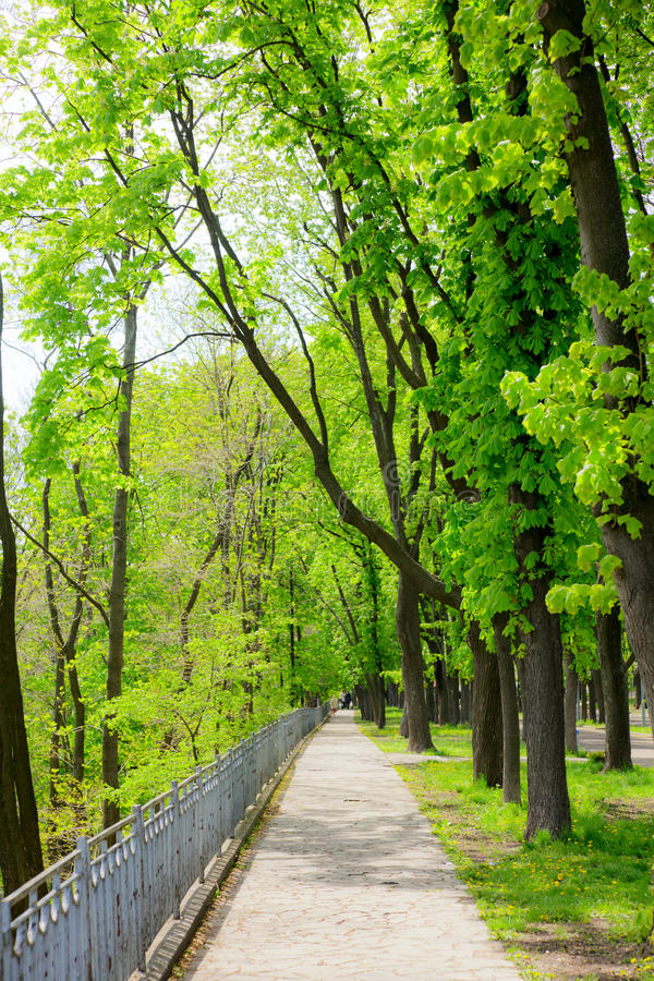 Download Park alley stock image. Image of footpath, growth, kiev - 19480607
