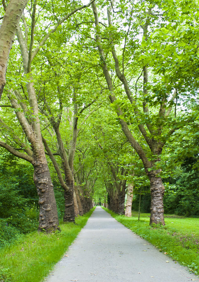 Download Park Alley Stock Photo - Image: 27320990