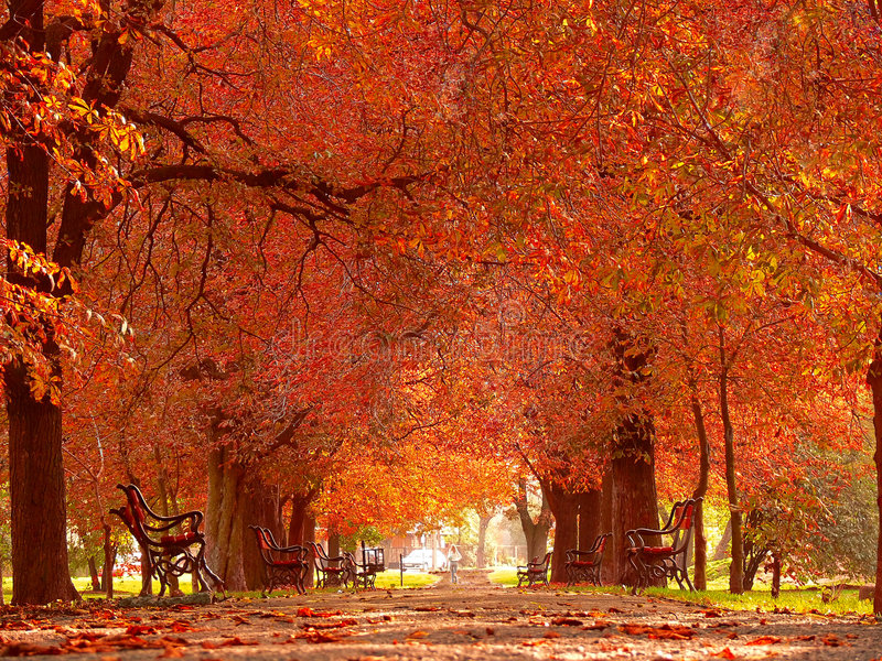 Download Park alley in autumn stock photo. Image of outdoors, changes - 1361344
