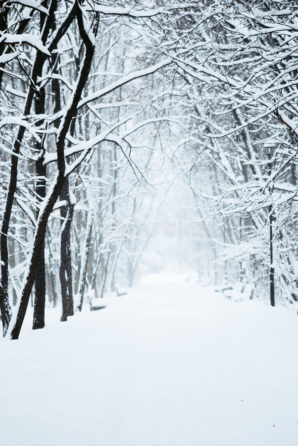 Park alley with snow stock photos