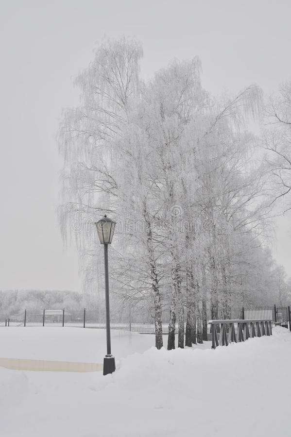 Park alley in winter royalty free stock image