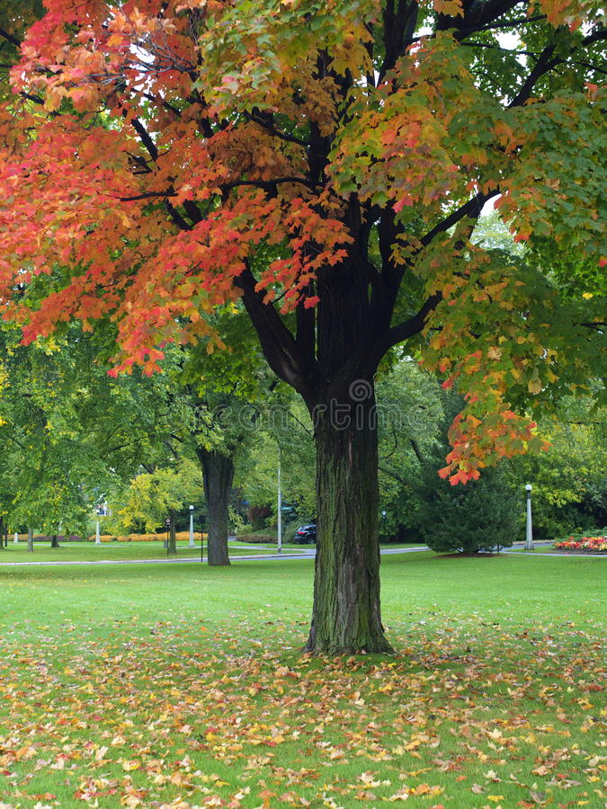 Download Park in autumn stock image. Image of lawn, landscape - 10322037