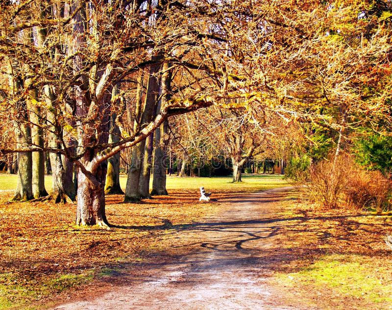 Download Park in autumn stock photo. Image of nature, tall, color - 13798058