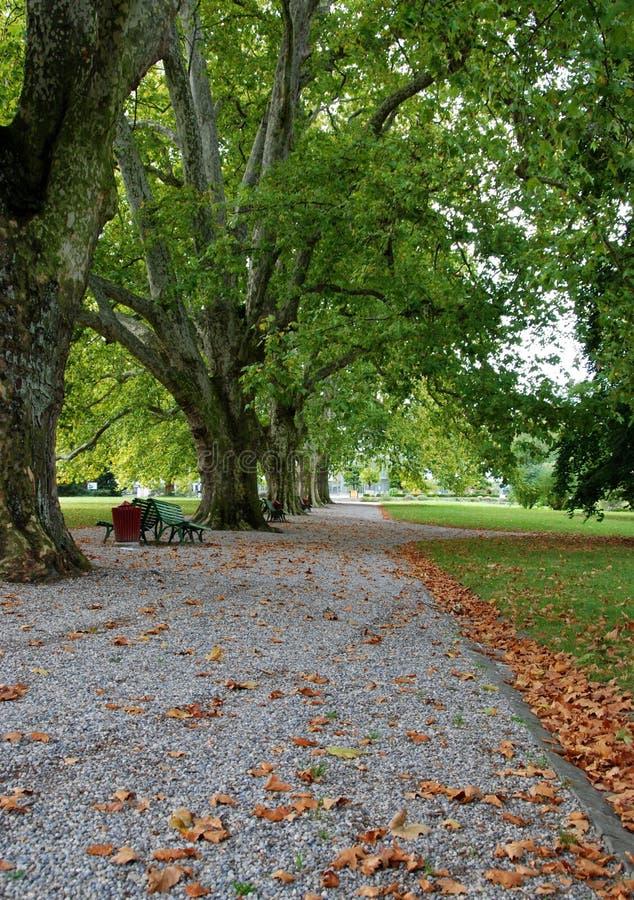 Park during Autumn stock photo