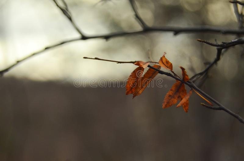 A park in the autumn, during cloudy weather, late autumn, defocused. A park in the autumn, during cloudy weather, late autumn royalty free stock photos