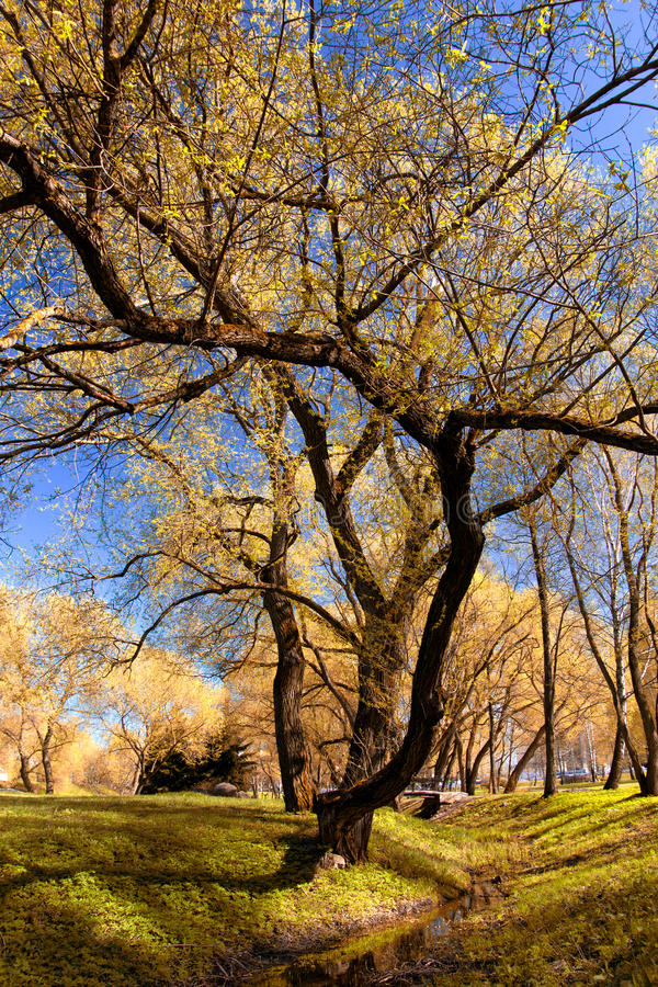 Park in autumn. Field and forest, the tree broke. chilly stock photos
