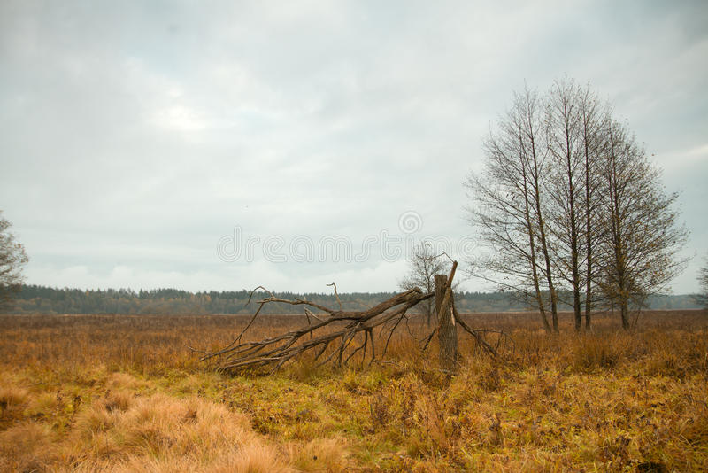 Park in autumn. Field and forest, the tree broke. chilly stock images