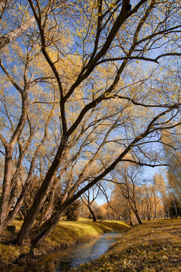 Park in autumn. Field and forest, the tree broke. chilly royalty free stock photos