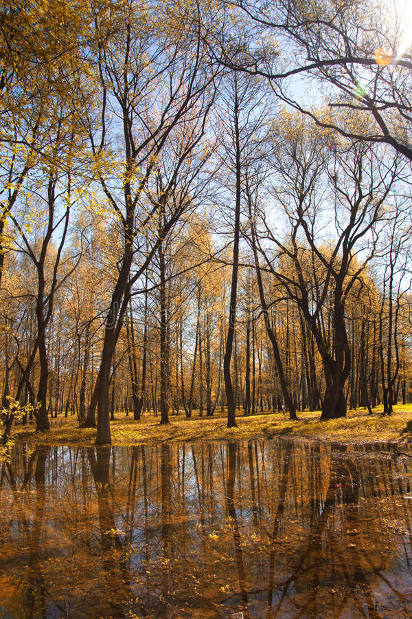 Park in autumn. Field and forest, the tree broke. chilly royalty free stock image