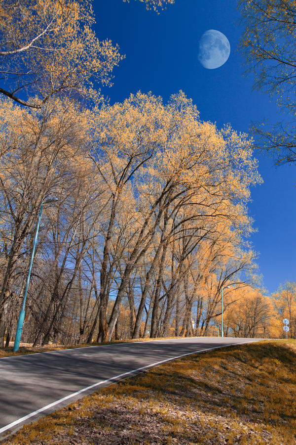 Park in autumn. Field and forest, the tree broke. chilly royalty free stock photo