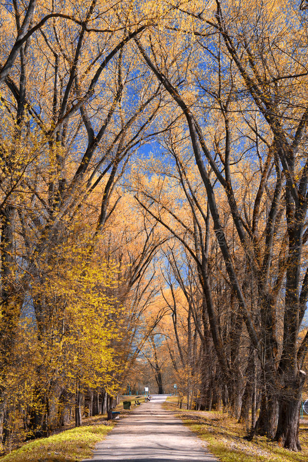 Park in autumn. Field and forest, the tree broke. chilly stock photography