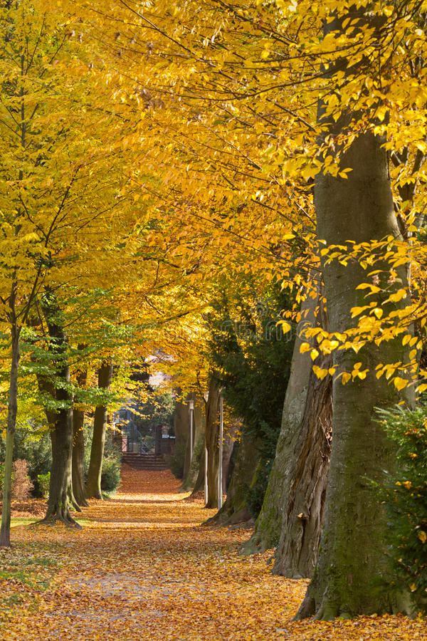 Park in autumn, Karlsruhe, Germany. Park in autumn with colorful trees, Karlsruhe, Germany stock photography