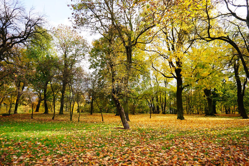 Park in the autumn stock photography