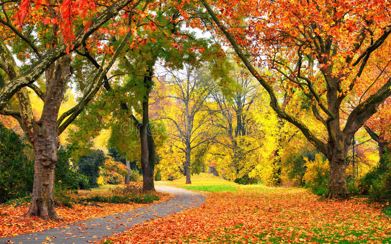 Park in autumn with pleasant colors. Autumn scenery in a park with warm colors, leaves on the lawn and a footpath leading into the scene stock images