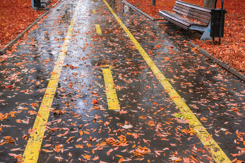 Park in Autumn Rain stock afbeelding
