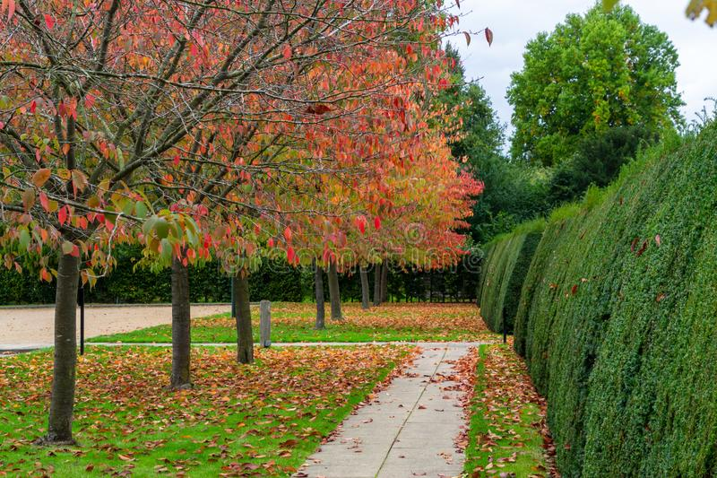 A park in autumn season with colorful foliage and trees. Landscape, nature, orange, yellow, beautiful, beauty, bench, blue, bright, brown, deciduous, english stock images