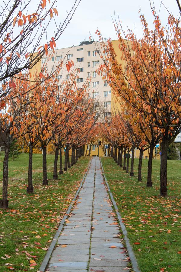 Path between the autumn trees and leaves leading to a housing block. A shot of a path between the autumn trees and leaves leading to a housing block stock photography