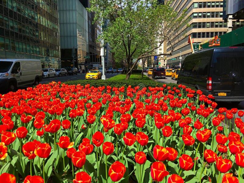Park Avenue blommor i NYC fotografering för bildbyråer