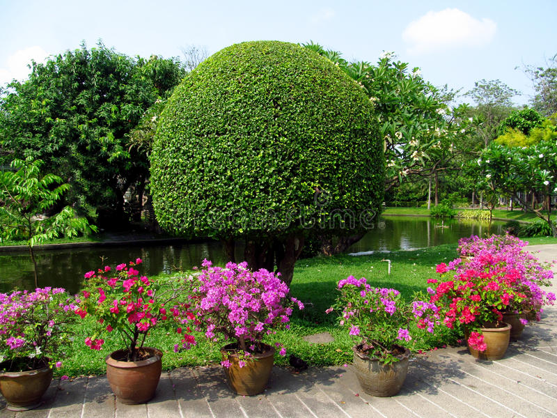 Park with beautiful trees and flowers in pots. Park with beautiful trees and flower in Asia, Thailand, tropical trees, blue sky with clouds, beautiful scenery stock image