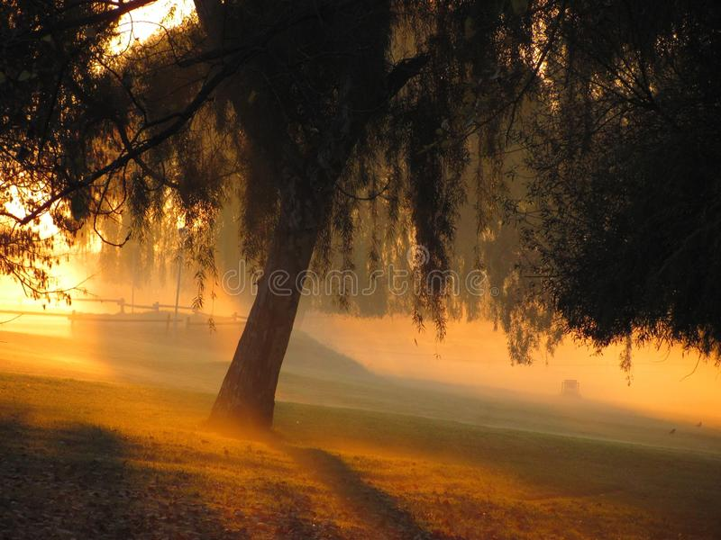 Park bei Sonnenaufgang lizenzfreie stockfotos