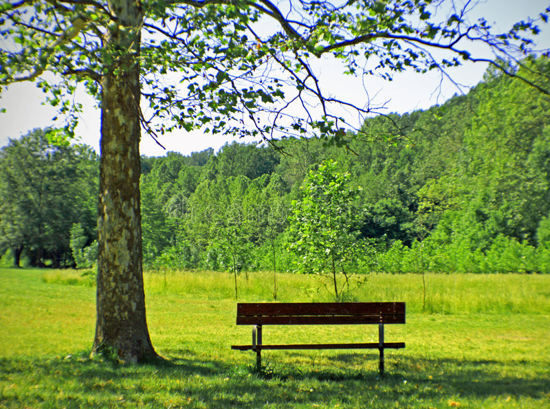 Download Park Bench stock image. Image of lonely, fall, forest - 5355953