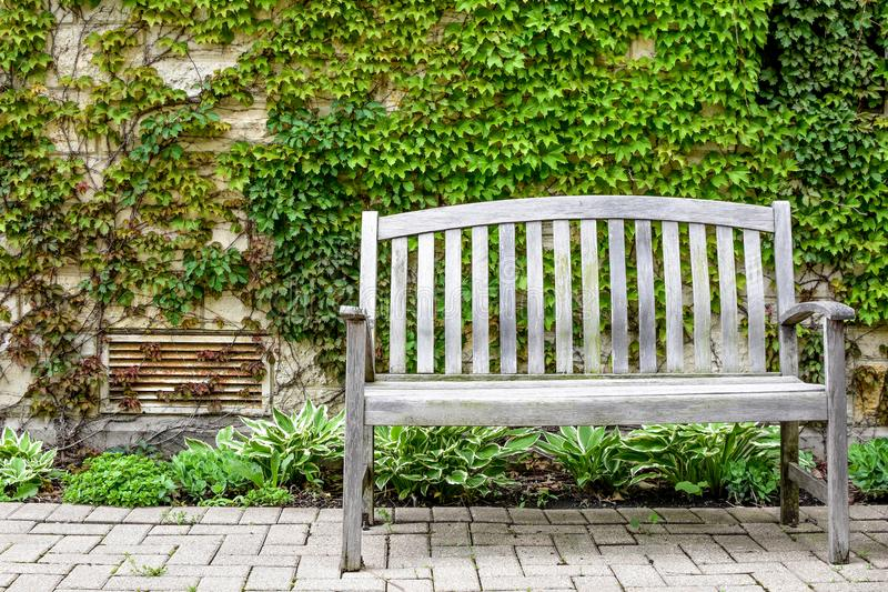 Park Bench in front of Ivy Wall stock images
