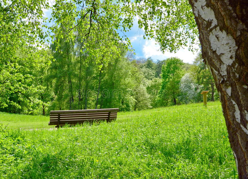 Park bench in nature stock image