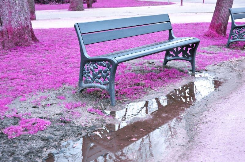 Park bench Vondelpark Amsterdam Holland stock image