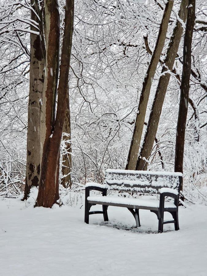 Park bench in winter woods stock photos