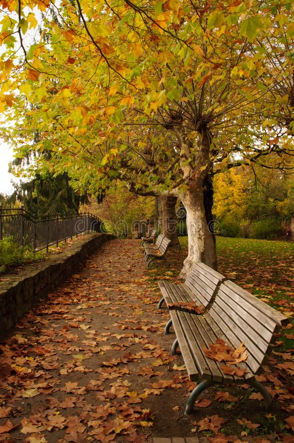 Park with benches in autumn stock photography
