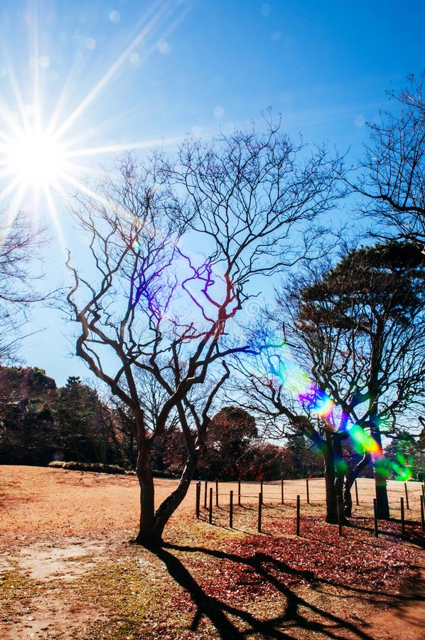 Park bij Vroeger Hotta-huis in Sakura-stad, Chiba, Japan royalty-vrije stock fotografie