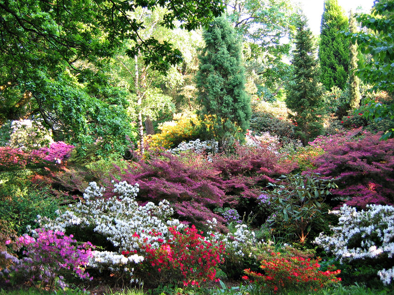 Park in bloom. Clyne Park (Swansea) in bloom royalty free stock photography