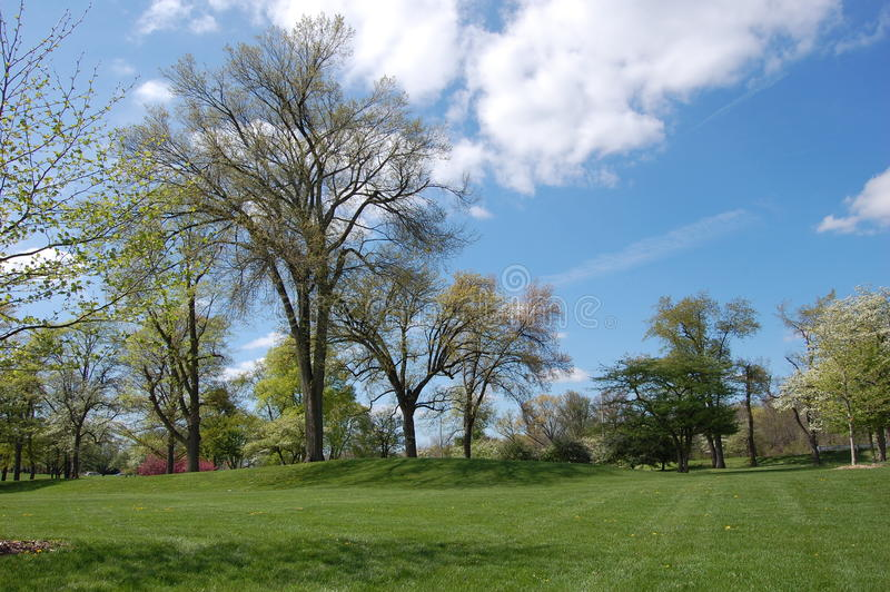 Download Park With Blue Sky stock image. Image of trees, blue - 31129619