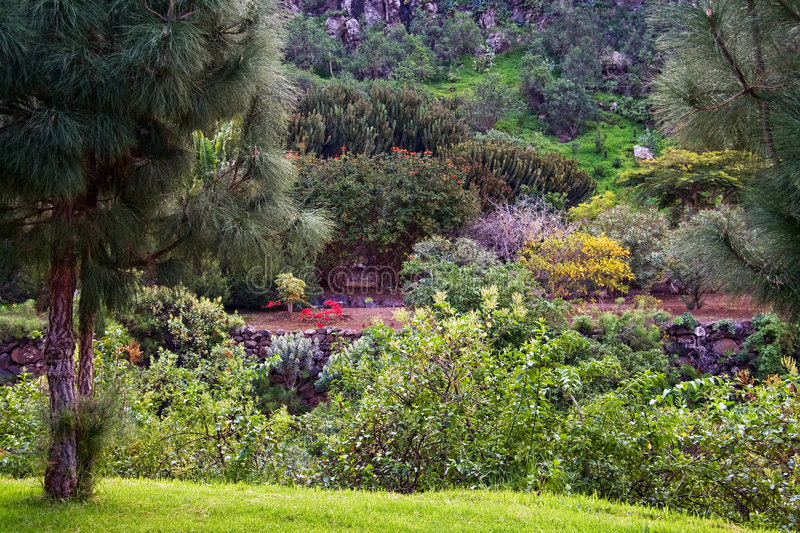 Park in Canary Island royalty free stock photography