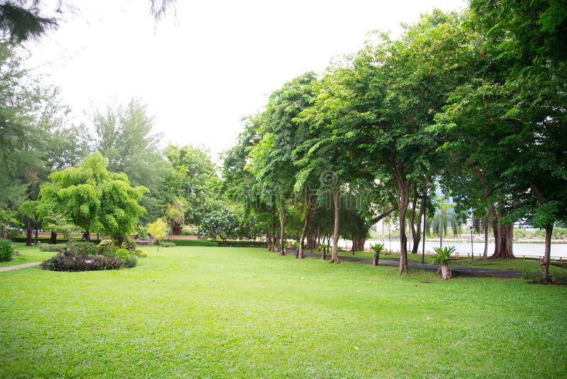 Park in the city full with tree ozone place. Park in the city full with tree ozone stock image