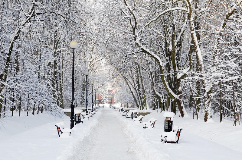 Park covered with snow. Winter park with red benches covered with snow royalty free stock photography