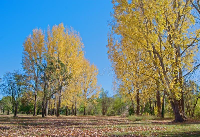 Park in de herfst of daling royalty-vrije stock afbeelding