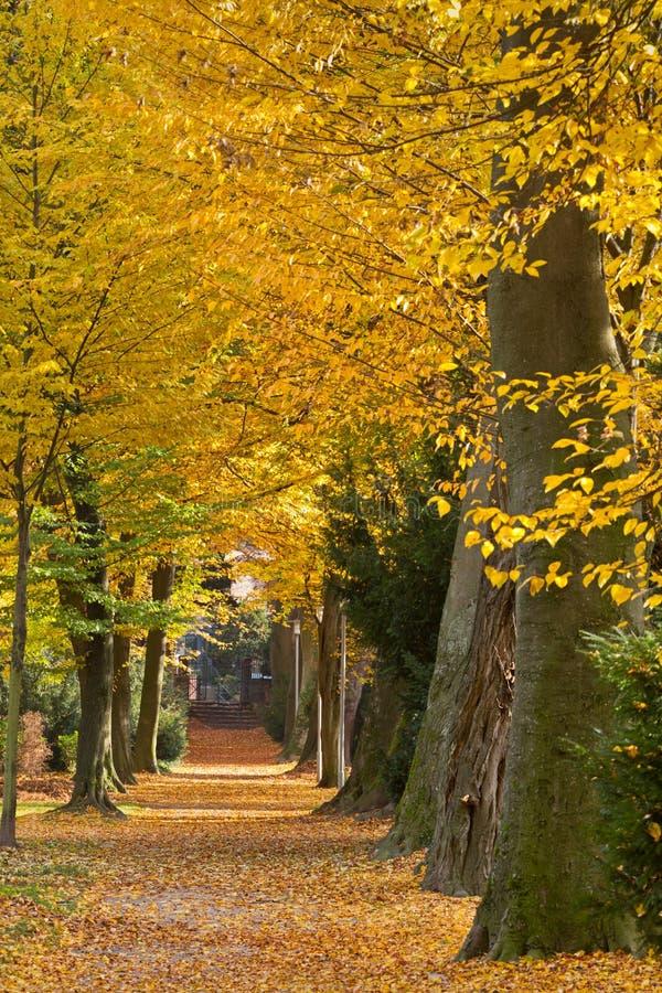 Park in de herfst, Karlsruhe, Duitsland stock fotografie