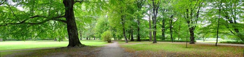 Park in de herfsttijd stock fotografie