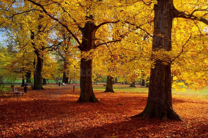 Park in de herfsttijd stock foto