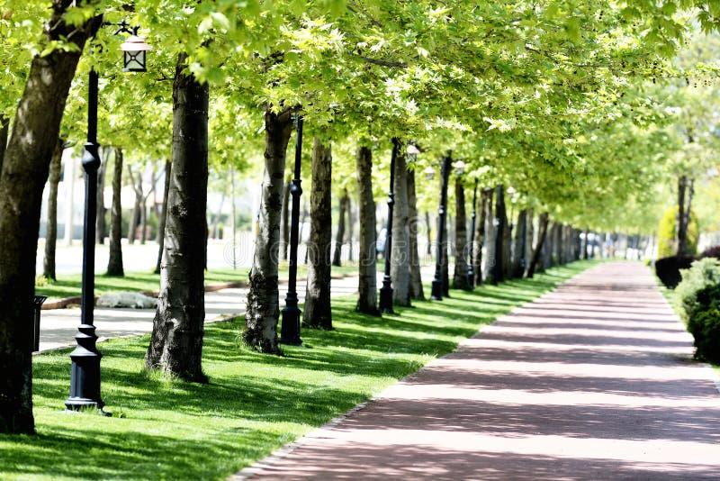 Park in de lente royalty-vrije stock foto's