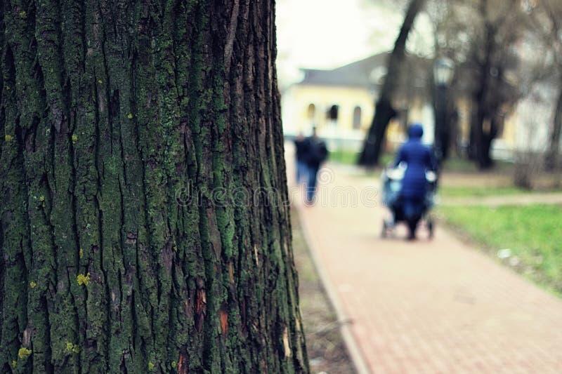 Park in de lente royalty-vrije stock afbeeldingen