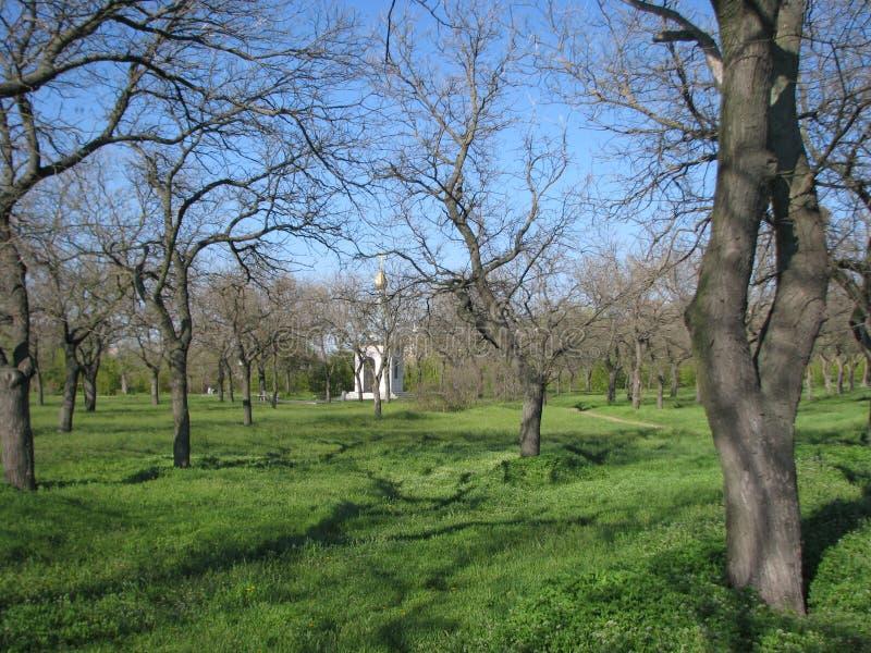 Park in de lente zonnig weer stock fotografie