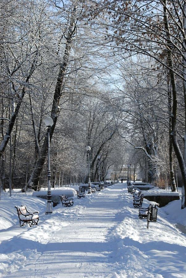 Park in de winter royalty-vrije stock foto's