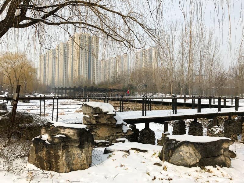 Park in de winter royalty-vrije stock foto