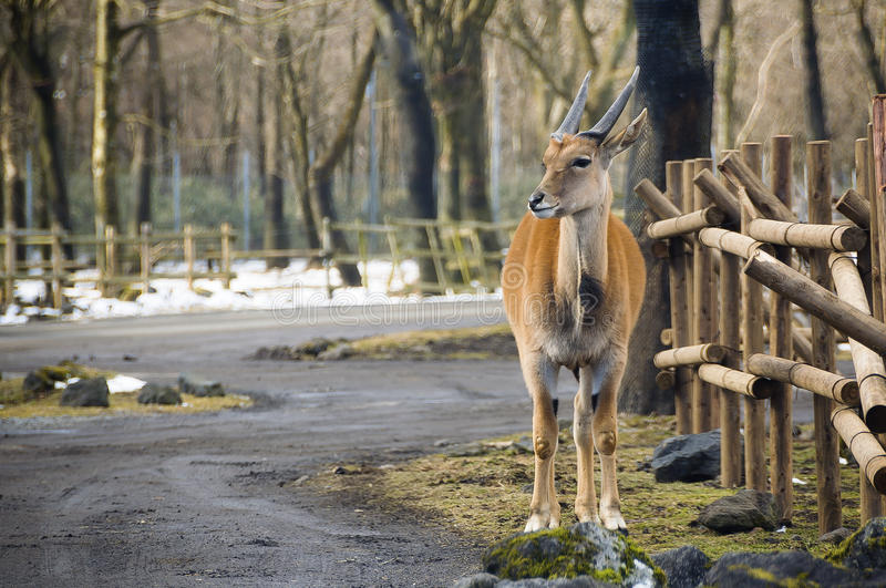 Park of the Deer. Hosts about 1,200 deer in semi-freedom. Most of the city`s historic monuments are in and around the wooded park stock photography